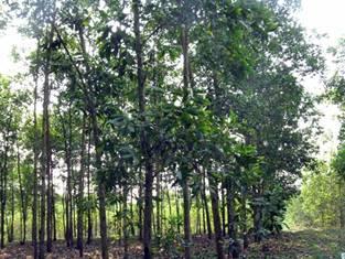 Một góc rừng xanh tốt ở Khu bảo tồn thiên nhiên Pù Huống. (Ảnh minh họa)