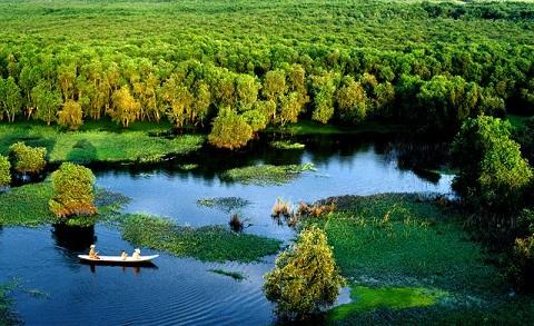 Quang cảnh rừng tràm Trà Su. Ảnh: QUANG THOẠI