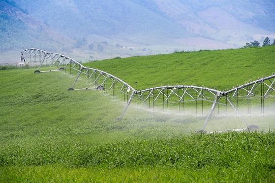 TH đã đầu tư những cỗ máy tưới nước tự động dài từ 250m đến 550m.