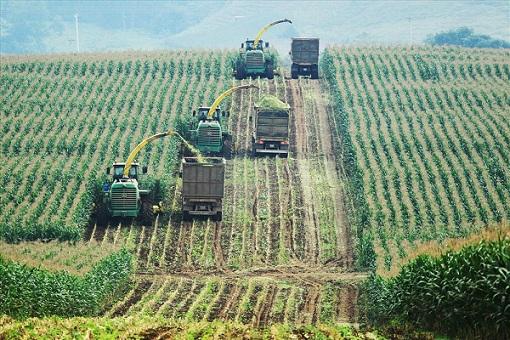 Để cung cấp thức ăn cho bò, TH còn có một cánh đồng nguyên liệu với 2.000ha các loại ngô, cao lương, hướng dương, cỏ Mombasa (Mỹ).