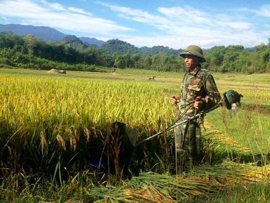 Ông Lô Hồng Vân, Trưởng bản Trung Chính, xã Yên Khê phấn khởi thu hoạch vụ mùa vừa qua đầy thắng lợi.